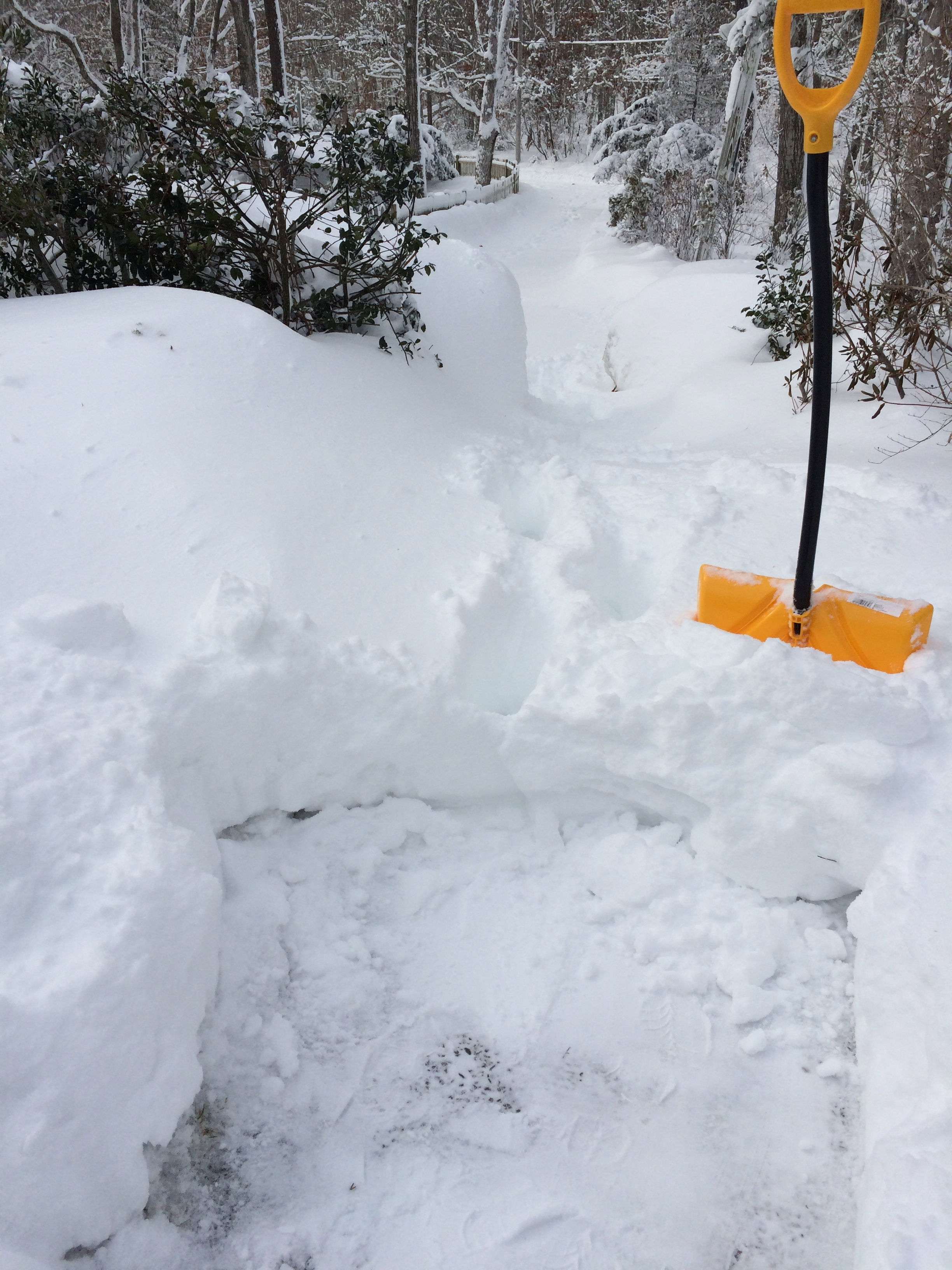 71e673c3124 The last of the snow melted from the driveway last week even though there  are still a few piles in the woods on the road, and we are finally  beginning to ...